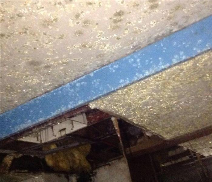 Basement ceiling covered in green and yellow mold